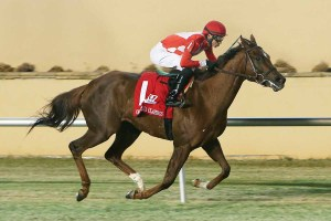 Won/placed in Five Stakes Races