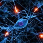 Nervous System Training 101: The Creation of Superhuman Strength and Athleticism