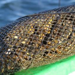 huitres-rouzieres-bouzigues (8)