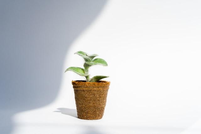Mulai Gaya Hidup Ramah Lingkungan