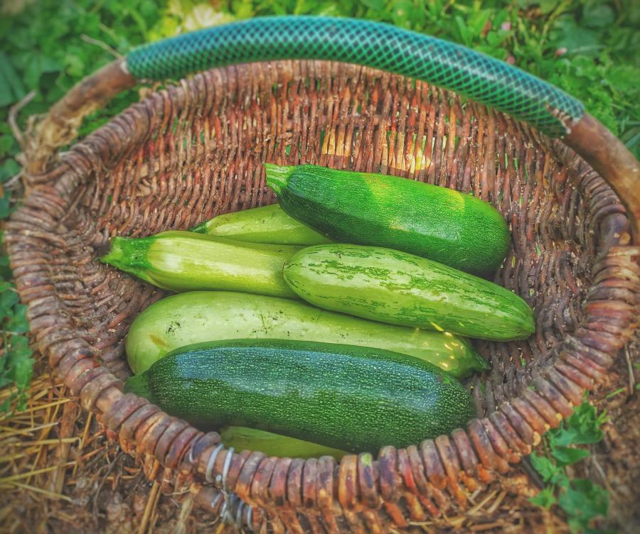 manfaat zucchini