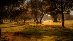 Paseo por los olivos