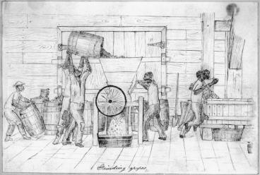 1870s illustration_Grapes_Image2