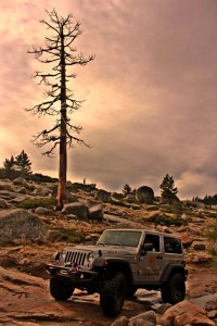 jeep and tree