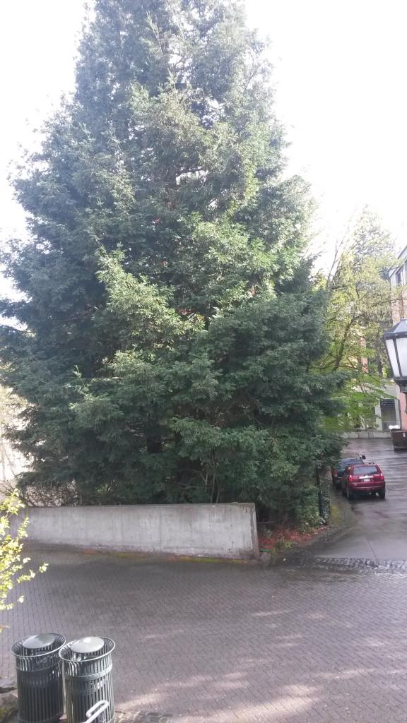 chemis-tree