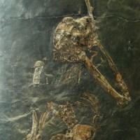 sulle tracce degli antichi binari, da Follonica a Massa