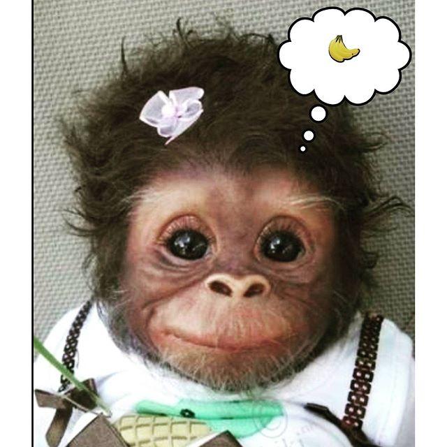 Banana Breakfast #Monkey #Banana #CuteMonkey #Primate #Adorable