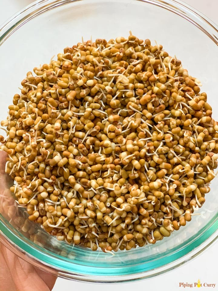Sprouted moth beans in a glass bowl