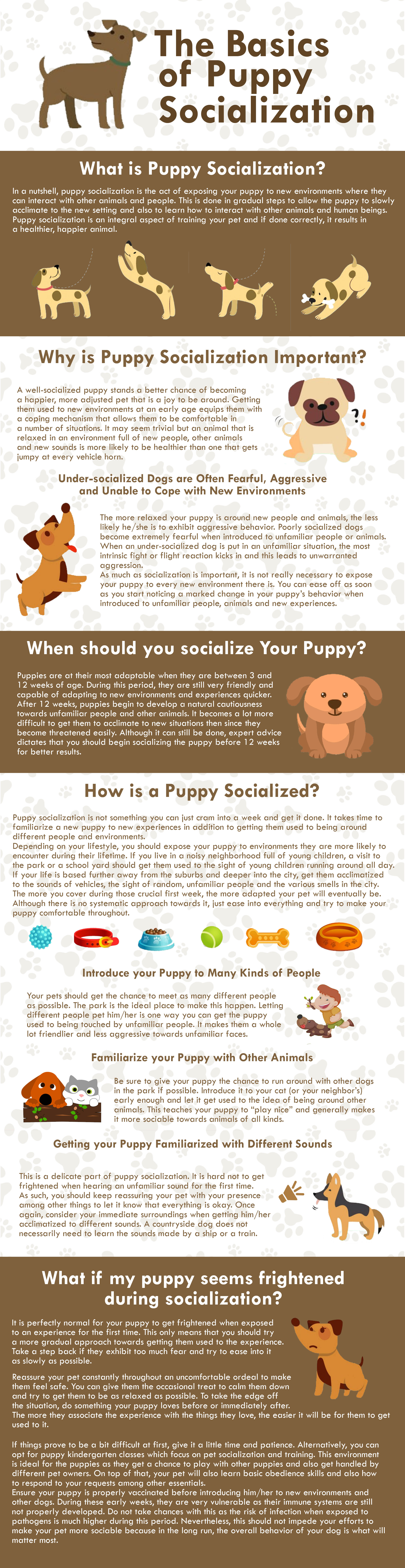 Puppy Socialization Infographic