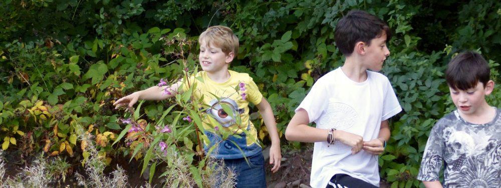 Children exploring plants