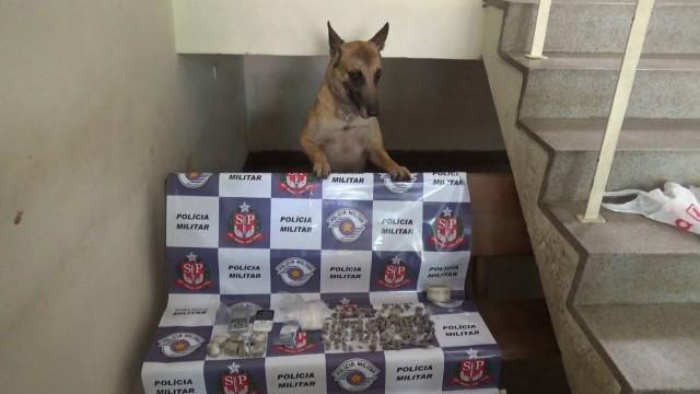 Dragon do Canil da PM ajudou nas buscas pelas drogas - Foto: Valter Martins / Piracicaba em Alerta