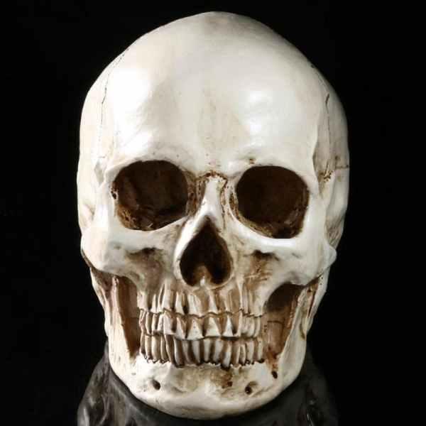 Realistic Skull Decoration