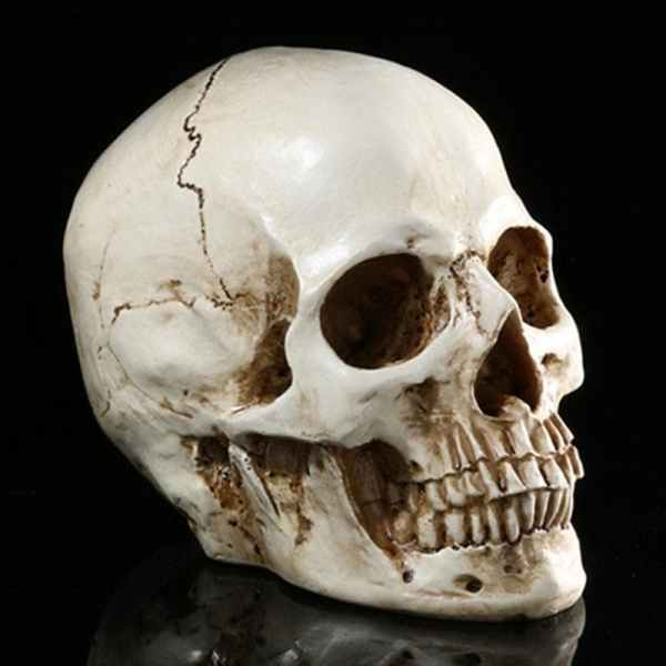 Realistic Skull Decor side