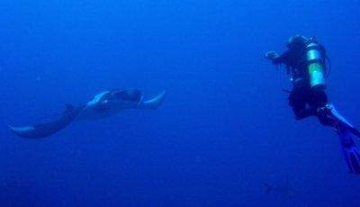 Manta and Diver At Ko Bon