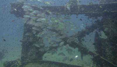 sea chart Local Khao lak reef dive