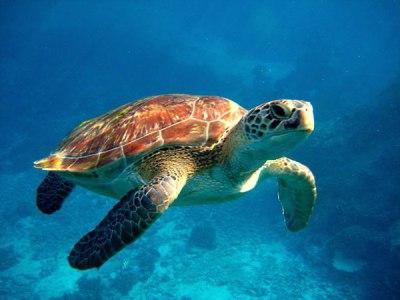 Diving similan islands