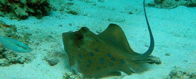 Similan Islands Day Trip Diving