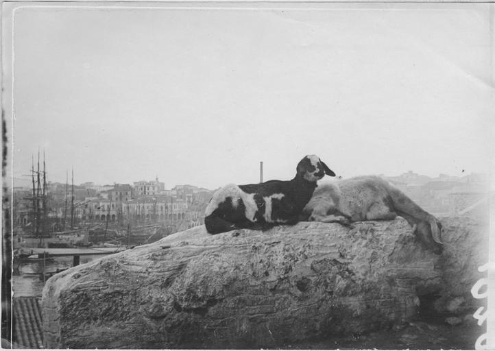 22 Νοεμβρίου 1916 - Λιμάνι Πειραιά
