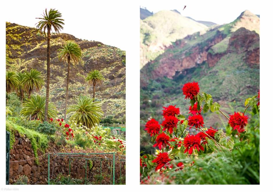 Cran Canaria-25