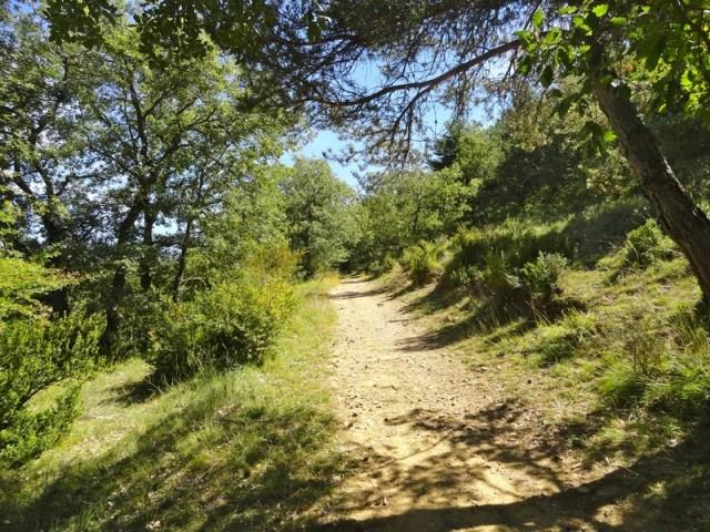 Camino de Santiago desde Jaca