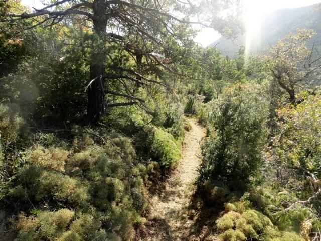 Subida senderos Ulle y Navasa