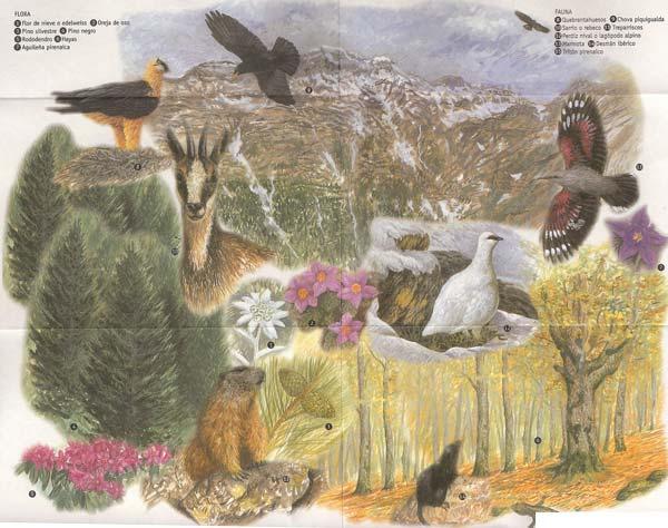 flora y fauna de ordesa