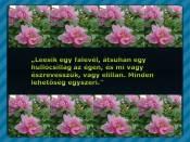 bolcs1