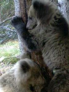 Femella i 3 cadells (2) · Foto: DAAM