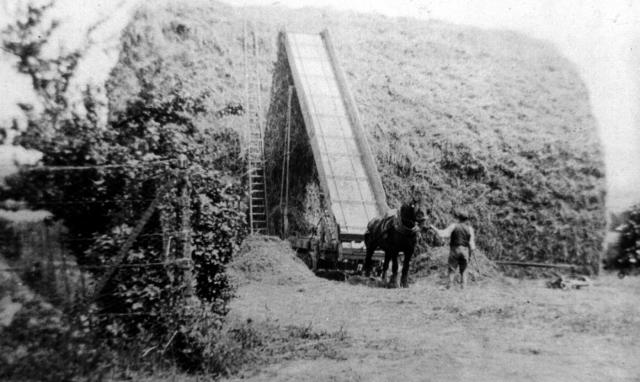 The rick being built with an elevator at Highdown Farm