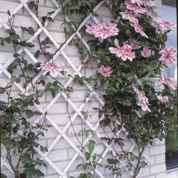 Nature Spalier de grădină, alb, 100 x 300 cm, PVC