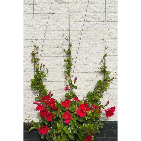 Nature Set cabluri spalier pentru plante cățărătoare, 6040760