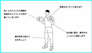 画像引用元:http://www.i-l-fitness-jp.com/dumbell/exercise/standing-arm-curl-exp-L.jpg
