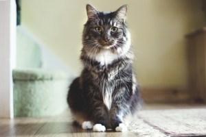 サムネ 猫 フリー素材