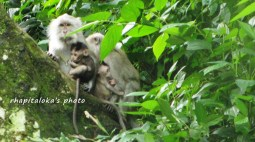 Keluarga Monyet