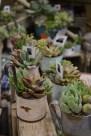 Singelos e delicados vasinhos de flores.