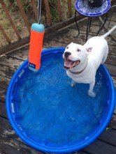 In the summer Hope loves to splash around in her baby pool and play with her pool toys.