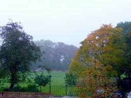 Autumn,nature,