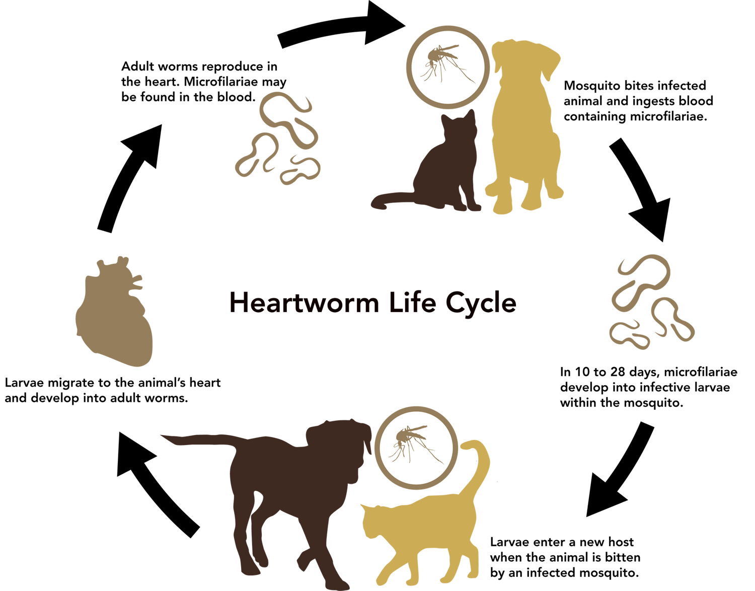 May Newsletter Heartworms And An Interview With Pat