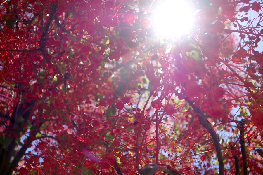 Sun Through Trees Perth