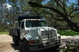 Truck under Trees (3)