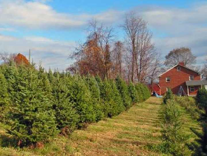You Cut Christmas Tree Farm