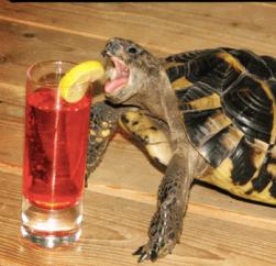 turtlefeed