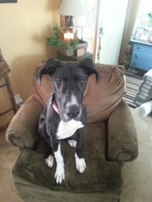 Buttercup pa dane rescue (3)