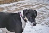 Chloe PA dane rescue (7) (1024x685)