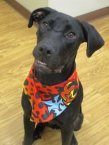 sherlock-puppy-rescue-1