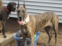 Zada PA dane rescue (4)