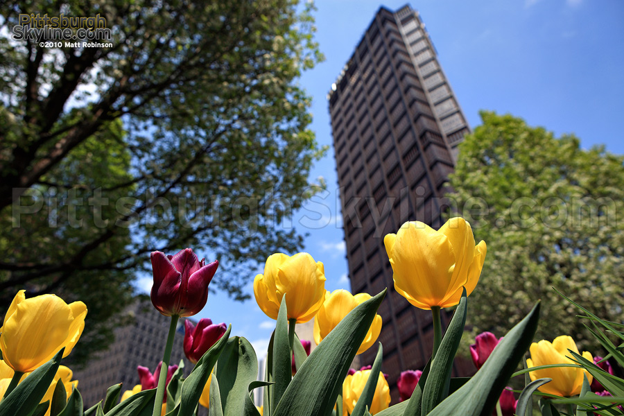 Tulips and the US Steel Building