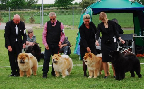 Piuk Chow Breeders Class Ejby 2015