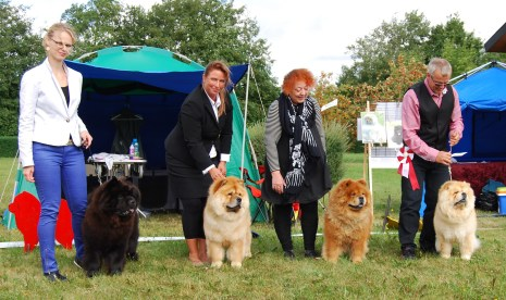 Piuk Chow - Breeders group Sandved 2014
