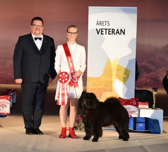 Veteran Of The Year 2019 in The Danish Kennel Club - of all breeds